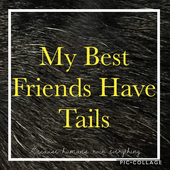 My Best Friends Have Tails